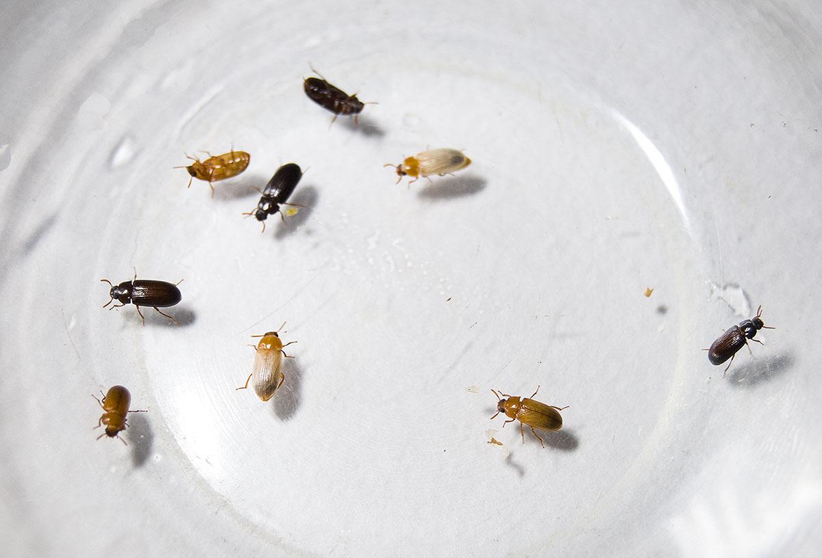 жук знахарь лечение инструкция отзывы противопоказания
